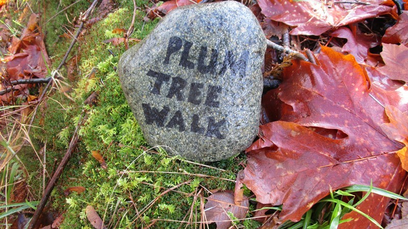 Painted rock, below, marks the entry of this walk from its Hyancithe Bay Road end
